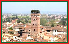 Tour the rooftop garden of the 14th Century Guinigi tower.